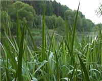Видео «Рыбалка с Пашком» — Летние воспоминания 2013