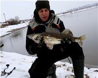 Видео «Голавлемания» -  Рождественский судак Москвы-реки