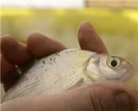Видео «Бюджетная рыбалка» — Всё для зимней ловли (3 выпуск)