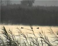 Видео «Главная охота» —  Охота на уток