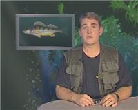 Видео «Рыбьи портреты» — Судак