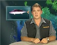 Видео «Рыбьи портреты» — Пеламида