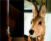 Видео «Главная охота» —   Охота и медицина