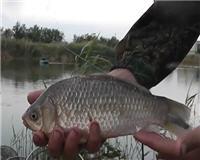 Видео «Рыбалка с Пашком» — Дон. Волгодонск