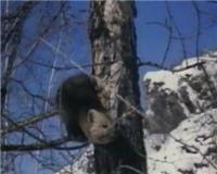 Видео «Главная охота» —  Зверосовхозы