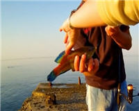 Морской джиг в Ялте. Горбыль, ласкирь, ёрш, рулена (зеленушка)