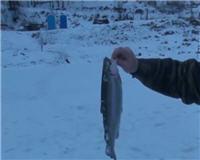 Видео «Рыбацкий дневник» — Форель на блесну со льда. Ловля форели на платном водоёме