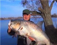 Видео «Клуб рыбаков» — Огромный толстолоб на троллинг
