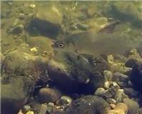 Счастливые люди - Сибирские рыбы (Избранное из фильма)