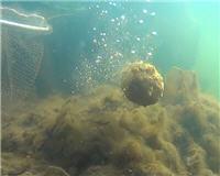 Рыбалка с Пашком —  Что там!? Под водой?