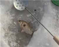 Дневник рыболова - Зимняя рыбалка 2015