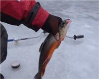 На рыбалке - Ловля палии в Швеции