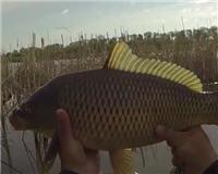 Клуб рыбаков — Рыбалка на карпа удочкой с боковым кивком с берега