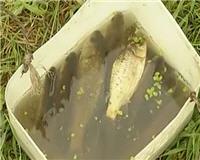 Рыбак рыбаку... — Рыбалка в Воейково. Ловим карася в пруду