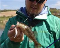 Видео «Рыболовный дневник» — Ловля ротана
