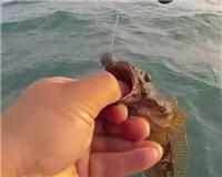 Клуб рыбаков — Черное море. Затока. Днестровская банка