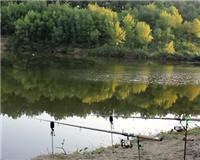 Дневник рыболова — Экспериментальная прикормка для ловли мирной рыбы. Часть 2