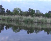 Клуб рыбаков — С поплавчанкой за карасём