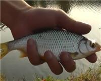 Рыбалка с Пашком — Осенний фидер на Пахре