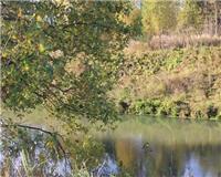 Балашиха и ближайшее околорубежье — Осенью на реке Воре