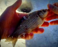 Зимняя рыбалка на карася. Половодье на реке Быстрая Сосна