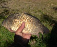 Ловля карася на сало — Дневник рыболова