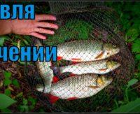 Ловля голавля на течении. Река Дон