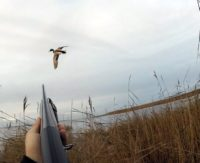 Охота на уток— Мир охотника