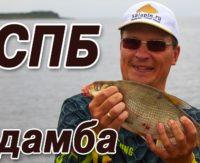 Рыбалка с фидером на дамбе Финского залива— Салапин
