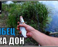 Ловля рыбца на фидер. Река Дон