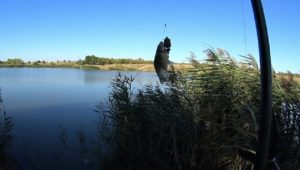 """Летняя рыбалка 2016 """"Неизданное"""". Часть 2 — Дневник рыболова"""