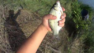Летняя рыбалка 2016