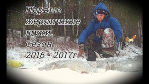 Первые жерличные щуки сезон 2016 - 2017 — Болен рыбалкой