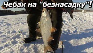 Чебак на безнасадку - ПашАсУралмашА: Зима 2016 — 2017
