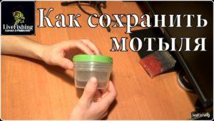 Как сохранить мотыля