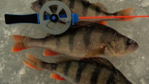 Ловля хорошего окуня на безмотылку - Рыбалка 68