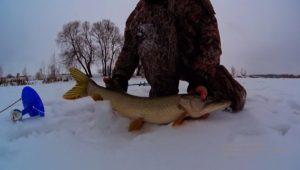 Подборка удачных моментов с  рыбалок на жерлицы - Рыбалка 68