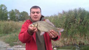 Семейная рыбалка на реке Самара - Дневник рыболова