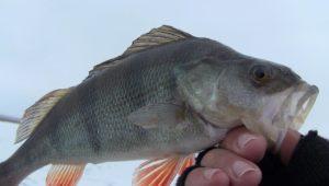 Три в одном — Дневник рыболова