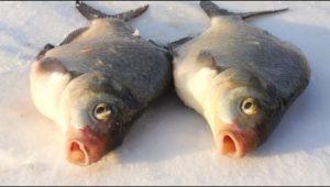 Ловля леща зимой на мормышку — Мужская компания