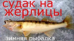 Ловля судака на жерлицы и подлещик на кивок - Рыбалка моими глазами
