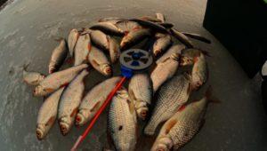 Ловля плотвы на безмотылку — Рыбалка 68