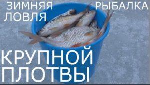 Ловля крупной плотвы на Яузском водохранилище —  Рыбалка моими глазами