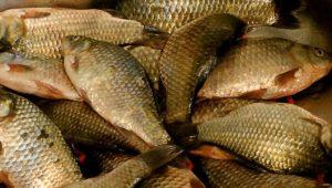 Лучшие насадки для белой рыбы. Часть 1. Карась. Лещ. Плотва.