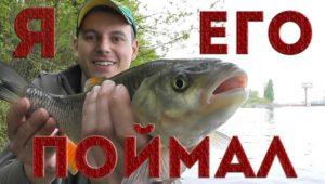 Голавль на майского жука — Рыбалка с Пашком