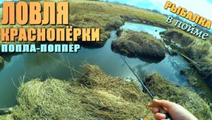 Ловля краснопёрки на баклушах и ручье в пойме реки