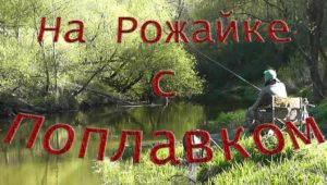 На Рожайке с поплавком — Рыбалка с Пашком