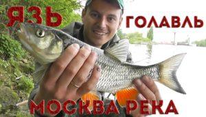 Язь и голавль на майского жука — Рыбалка с Пашком