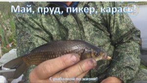 Май, пруд, пикер, карась! — С рыбалкой по жизни