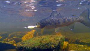 Ловля форели-пеструшки на самодельные блесны в маленькой лесной реке - Мужская компания
